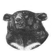 Surf_classic_bear_orang2
